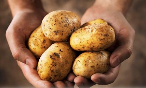 Как сохранить картофель в квартире до весны: секреты хозяек